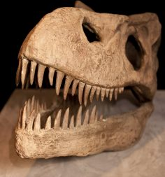Reading the Fossil Record: Why Data and Machine Learning Tell Us Less Than We Think